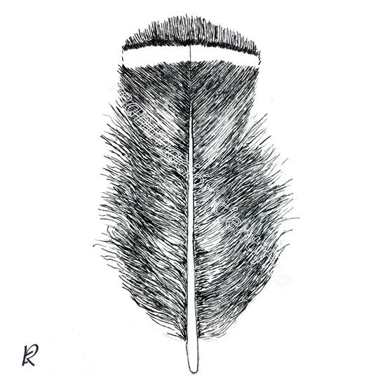 Alectoris rufa (Tinta china)