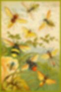 bees-sm.jpg