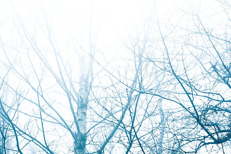 TreeFog_150_1563_4a-sm_edited