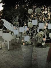 VLL-TVNC giardino14