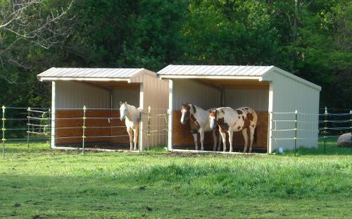 Horses under shelter