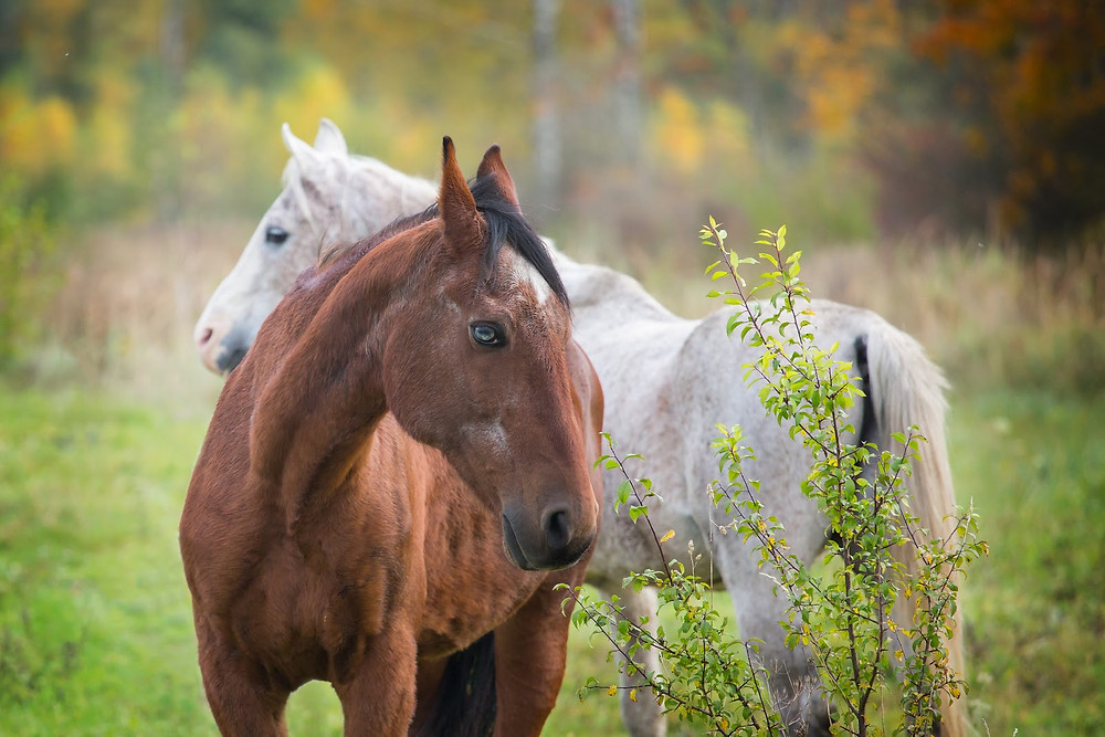 Two horses standing in a field