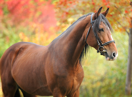 A Fall Checklist to Maintain Your Horse's Health