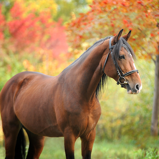 Horse with fall foliage