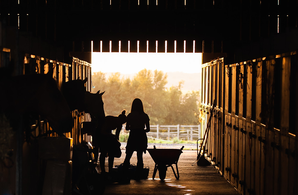 As the temperature begins to rise, look to make adjustments into your horse's daily schedule.