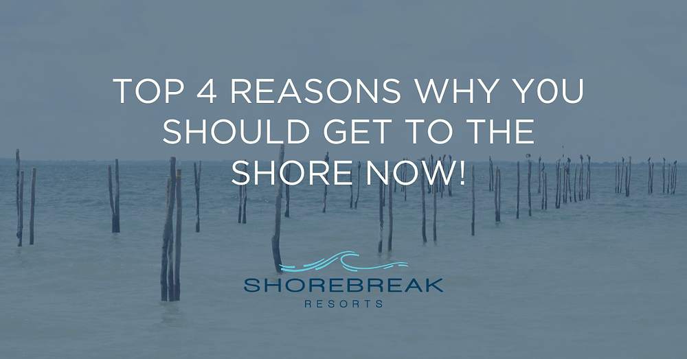 he shore is the best place to be right now, and here are the top 4 reasons why.