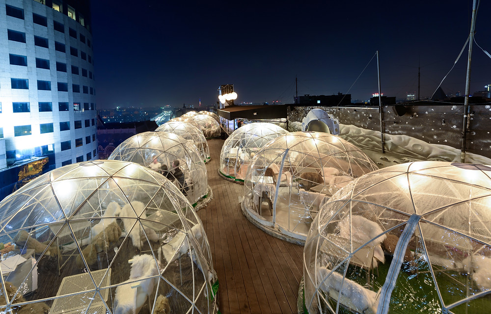 Igloo tents for social distanced dining