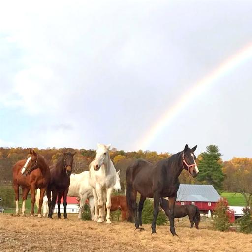 Horses with rainbow