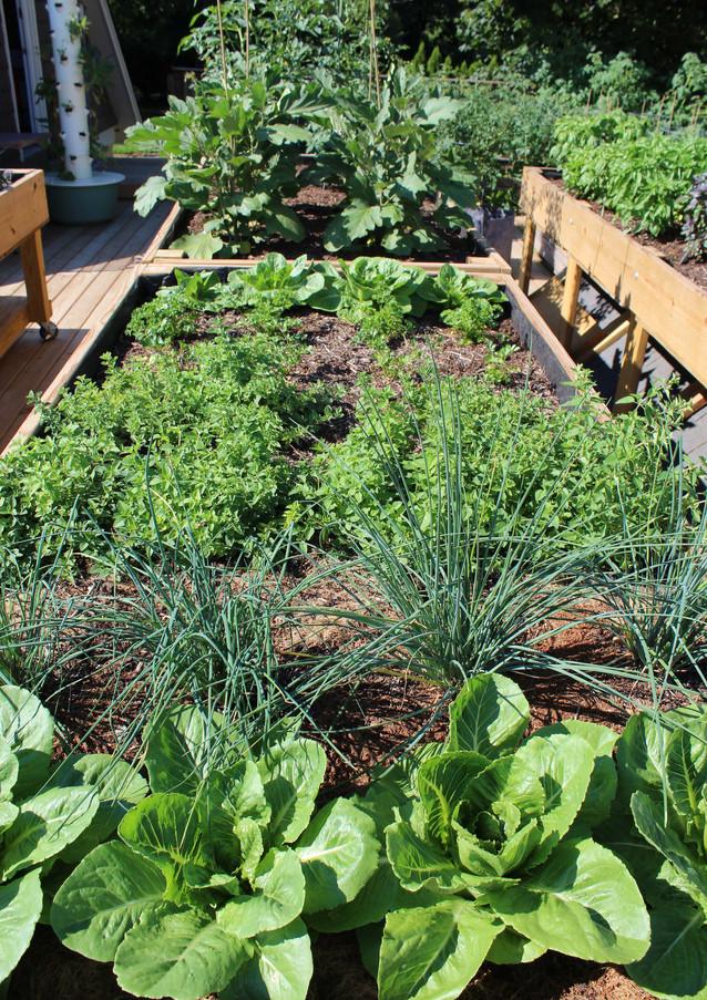 garden-wide-shot_27950492904_o.jpg