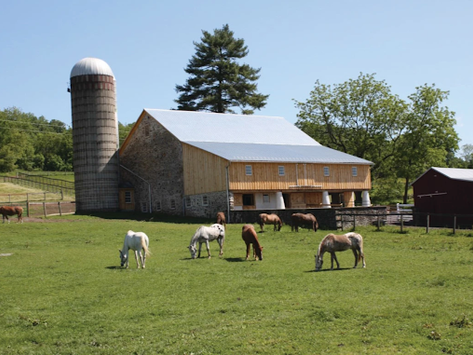 10 Ways to Spend Your Summer with Ryerss Farm