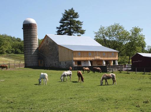 Horses in Ryerss Farm field