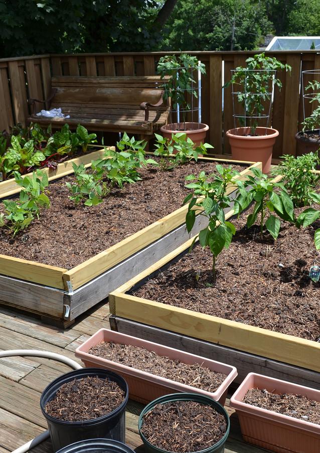 rooftop-garden_18434385464_o.jpg