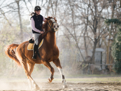 Spring Horse Training Tips: Conditioning Senior Horses