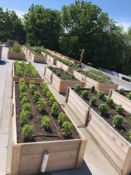 Our Roof Garden in Downingtown