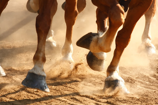 Close up of horses hooves running