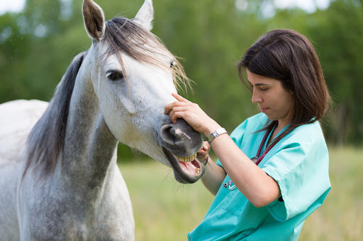 Keep Your Horse in Tip Top Shape