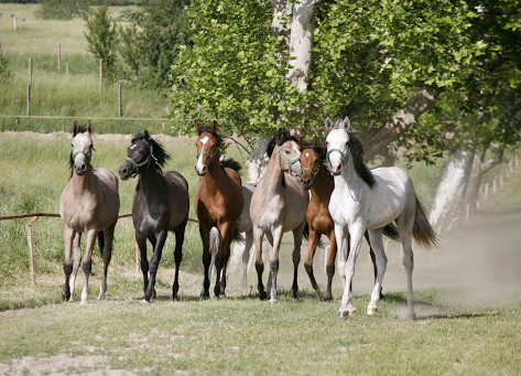 Different Types of Horses That you can Find at Ryerss Farm