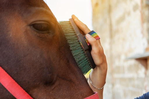 Person brushing horse's head