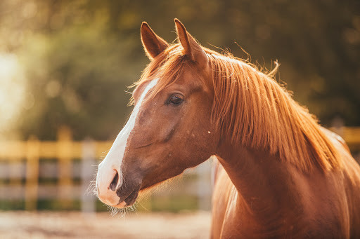 10 Things You Might Not Know About Senior Horses