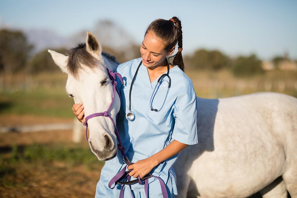 Vet petting white horse