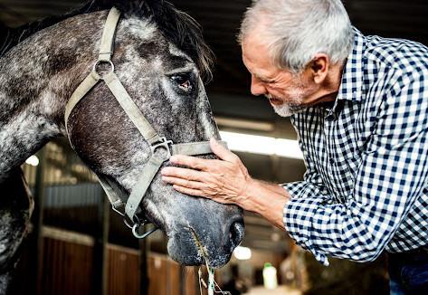 TLC for the Senior Horse: 5 Steps