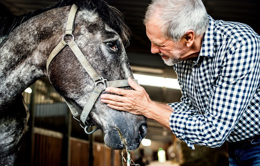 Senior horse and man