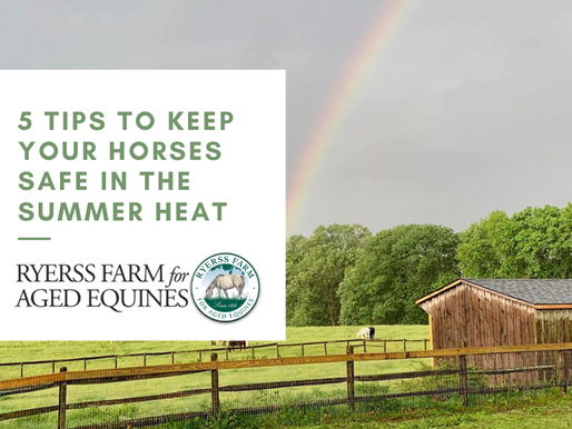 5 Tips to Keep Your Horses Safe in the Summer Heat