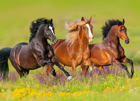 Run for the Horses 2021
