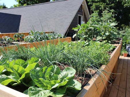 Rooftop to Your Table: Fresh Produce Kicks Up Takeout Cuisine