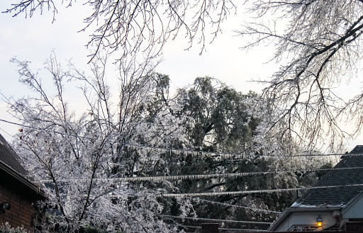Icy branches