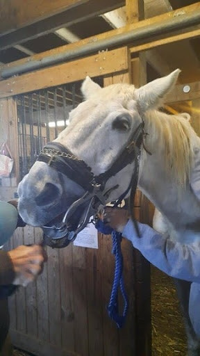 Horse getting dental check at Ryerss