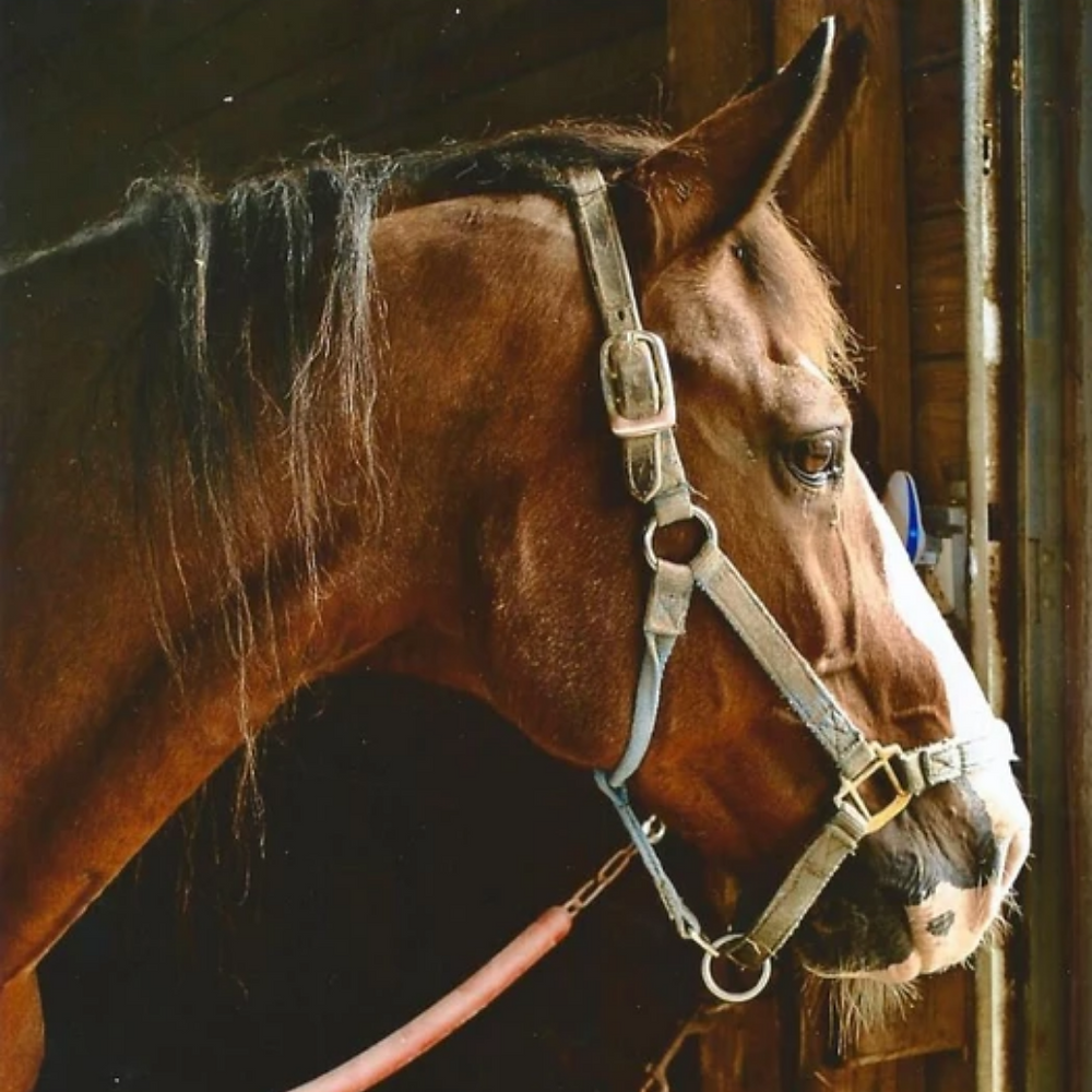 When you sponsor a horse, you are helping to offset the costs of caring for all of our horses.
