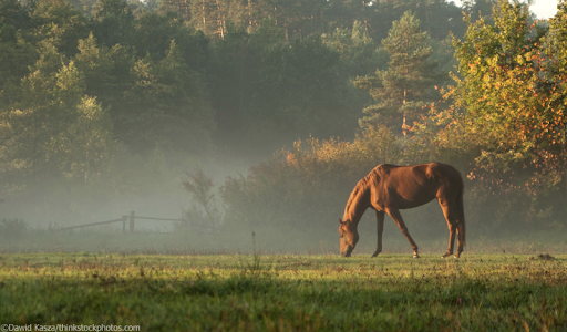 5 Health Issues to Watch for in Your Senior Horse