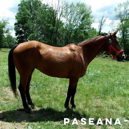 Horse named Paseana