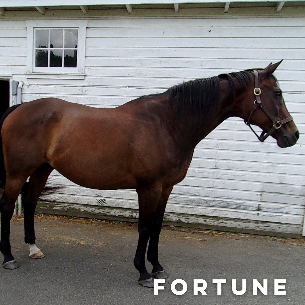 Horse names Fortune