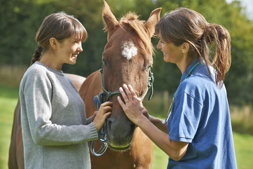 Volunteering at Ryerrs can offer other ways to grow your network of horse lovers.