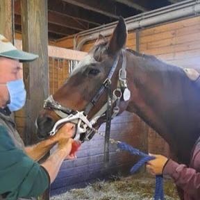 Mark Cheshire, Ryerss' equine dentist
