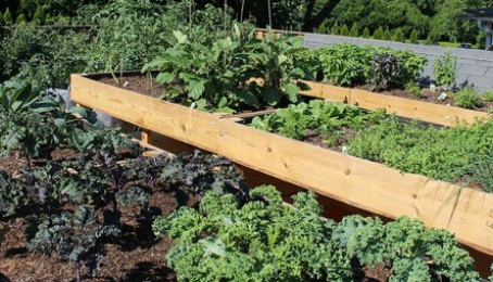 From Our Rooftop Garden to the Table (That's Fresh!)