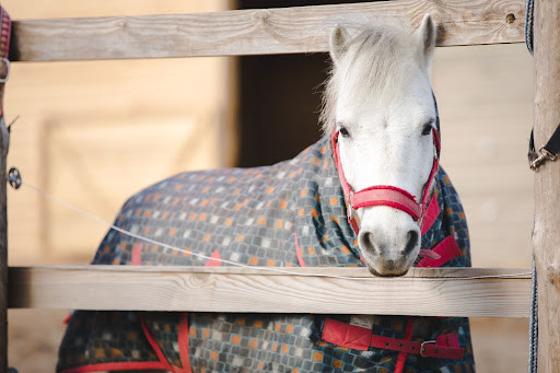 Horse with blanket on
