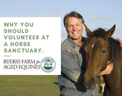 Looking To Volunteer at an Equine Rescue / Sanctuary? Here's Why We Think That You Should