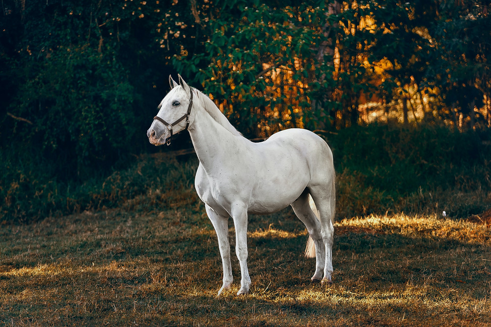 The early morning and late afternoon will be the coolest time of the day to bring your horse out.