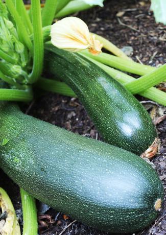 zucchini_27950486334_o.jpg