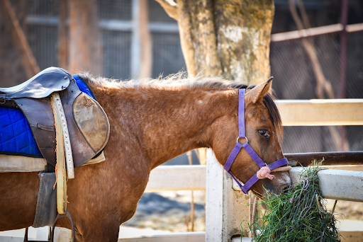 What is Fall Laminitis and How Can You Manage It?