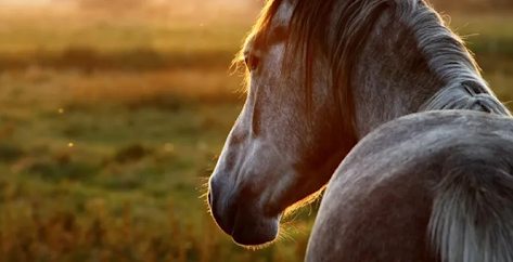 10 Senior Horse Facts You May Not Know