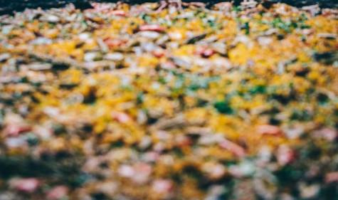 Paella7-lowres.jpg