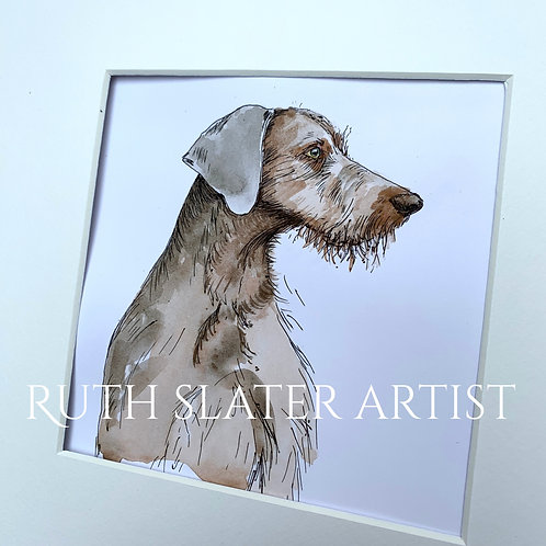 Slovakian Wire Haired Pointer Original