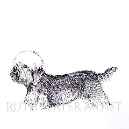 Dandie Dinmont Terrier Original