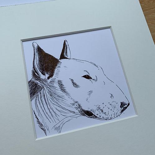 English Bull Terrier Original