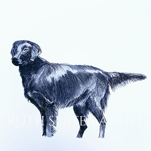Flat Coated Retriever Original