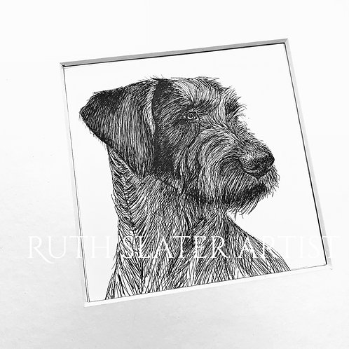 German Wire Haired Pointer Original